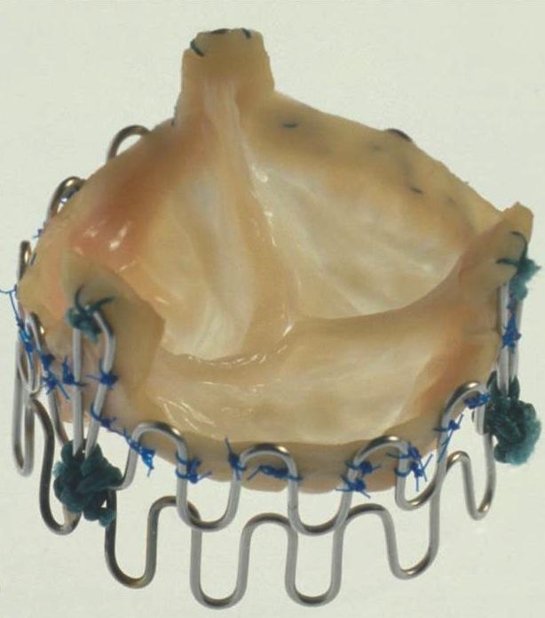 Original porcine valve