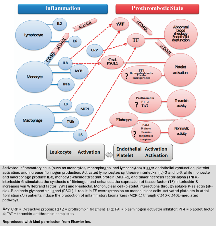 Figure 1. Proposed Mechanism Linking Inflammation and Thrombosis in AF