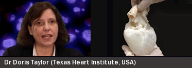 Lab-grown human heart implants: fiction or reality?